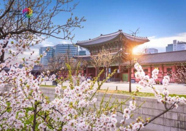Tour Hàn Quốc giá rẻ
